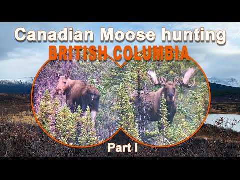 Canadian Moose Hunting in British Columbia – Part 1 /2020