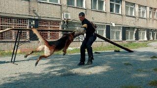 VL ru - кинологи-фигуранты Владивосток