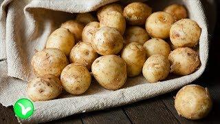 Молодой картофель - польза и вред. Стоит ли есть ранний картофель?