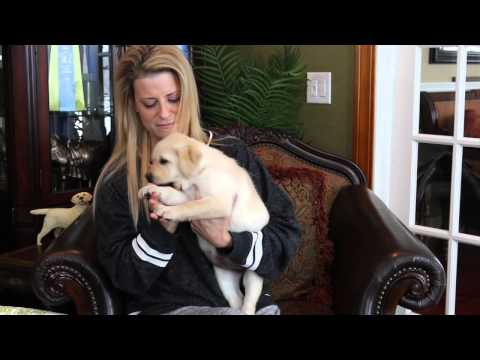 breeder-insights:-puppy-play-biting