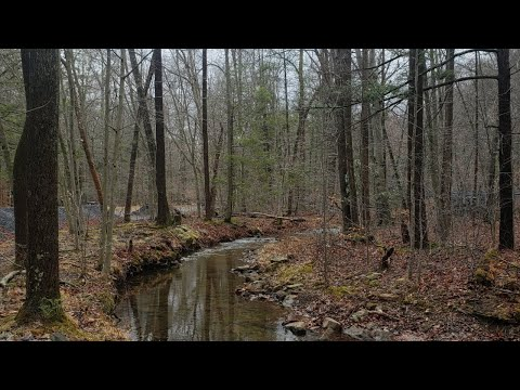 Small Stream Fishing For PA Native Brook Trout