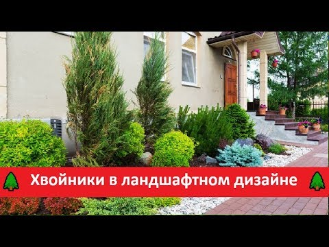 🌲ХВОЙНЫЕ растения в ландшафтном дизайне сада🌲ТУЯ в ландшафтном дизайне