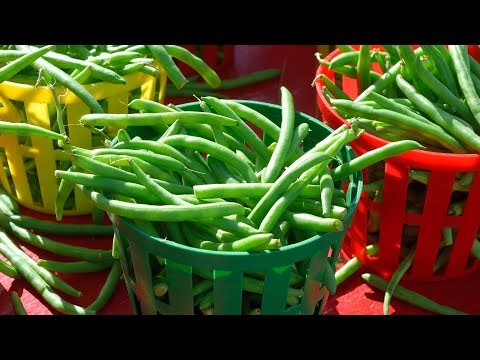 8 Benefits Of Green Beans you may wish to know earlier| Health And Nutrition
