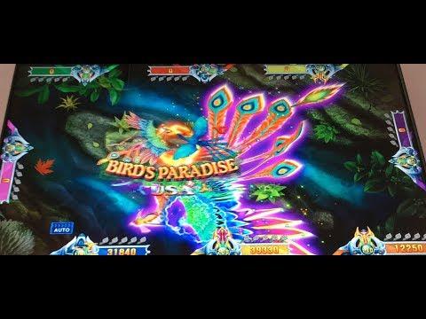 Birds Paradise USA Fishing  VGame Gambling Fish Hunter Games Machines For Sale