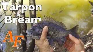 Tarpon Fishing on Foot with Bream Andysfishing Andy