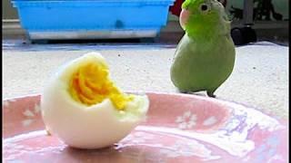 Koolaid talks to hard-boiled egg