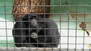 Очень грустные обезьянки сидят в обнимку