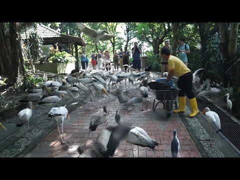 Exploring the KL Bird Park and PC Shopping at Low Yat Plaza Electronics Mall Travel Vlog