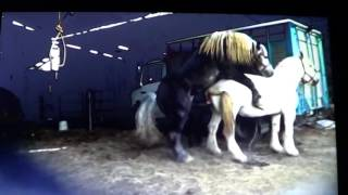 Horse Runs Off With Stupid Human Because Of Missed Warnings - Good Stud Breeding