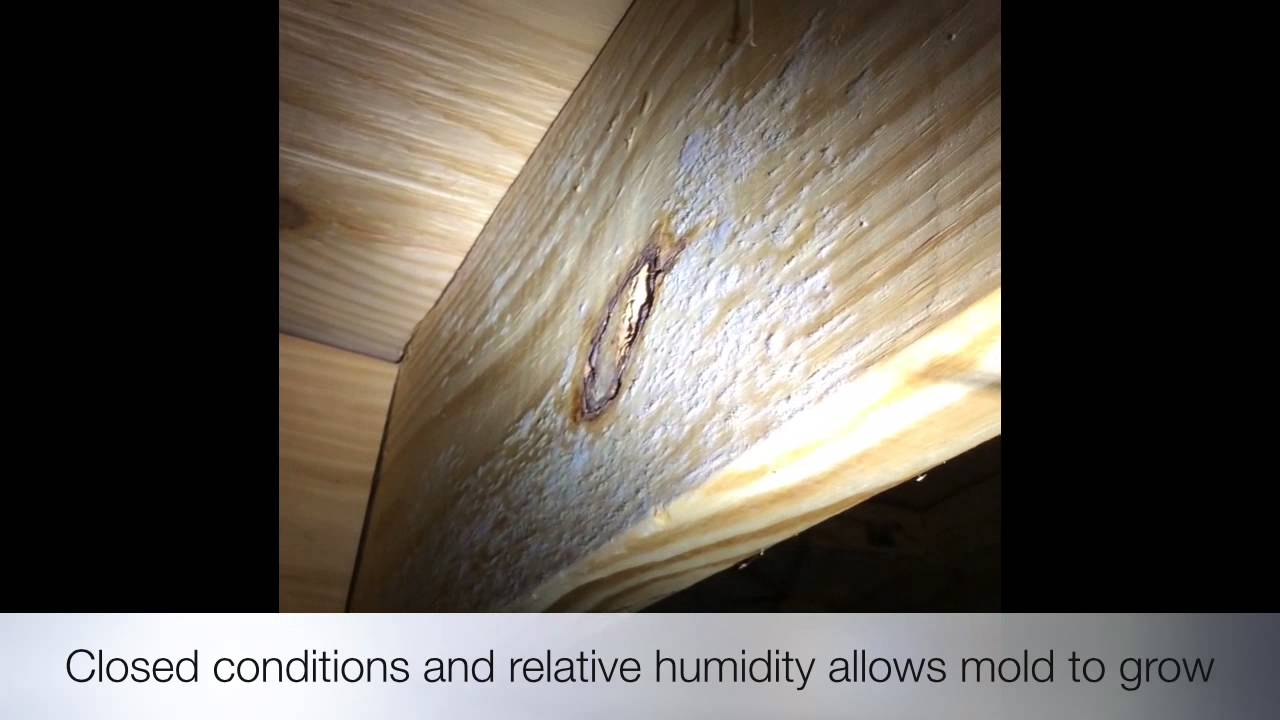 Hme Inspection Buford Ga Shows Mold Above Drop Ceiling In Atlanta