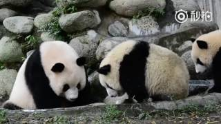 Video Panda mom presses her naughty baby for a bath download MP3, 3GP, MP4, WEBM, AVI, FLV Agustus 2018