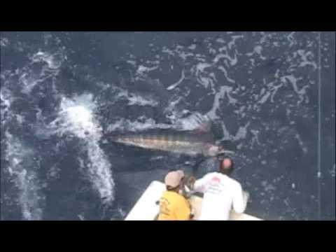 Blue Marlin - Rascal Charters Maui