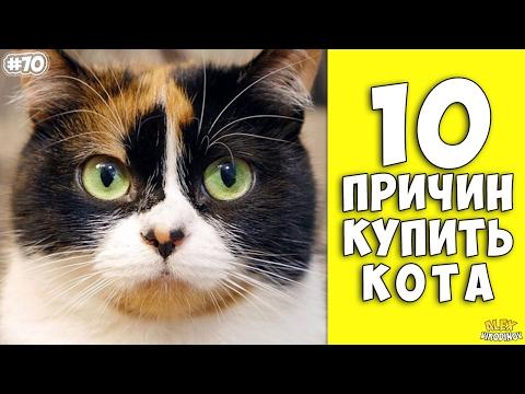 Топ-7 советов для покупки породистого котенка