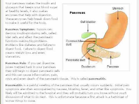 Pancreas Symptoms Pancreas Pain Pancreatitis Youtube