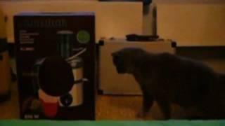 Кот и домовой(Кота что-то шугает из абсолютно пустого ящика, который раньше был его