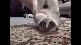 Нарезка ораловских видео!! Берите попкорн! Коты и кошки