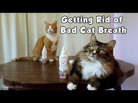Getting Rid of Bad Cat Breath with Espree Oral Care Gel