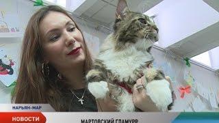 Большая кошачья выставка «ГлаМурр» собрала больше тысячи посетителей