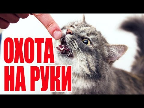 Вопрос: Как отучить котенка кусаться?