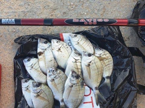 דיג בוס עם שניי בצקים שונים - בצק מבושל & פילוטה ביתית