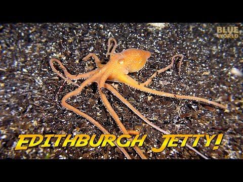 Diving Edithburgh Jetty, South Australia! | JONATHAN BIRD'S BLUE WORLD