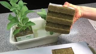 열매채소키우기 토마토키우기 고추키우기 수경재배 식물키우…