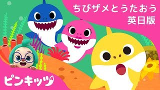 ちびザメ どこかな? | サメのかぞく | ちびザメとうたおう英日版 | どうぶつのうた | ピンキッツ童謡