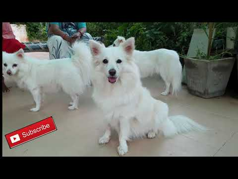 Double Red Hibiscus plant  & Cute and Funny Dog Videos Compilation #harshil raval  |