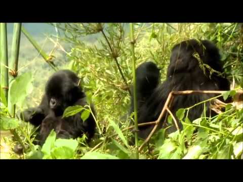Rwanda, land of 1000 hils, english spoken