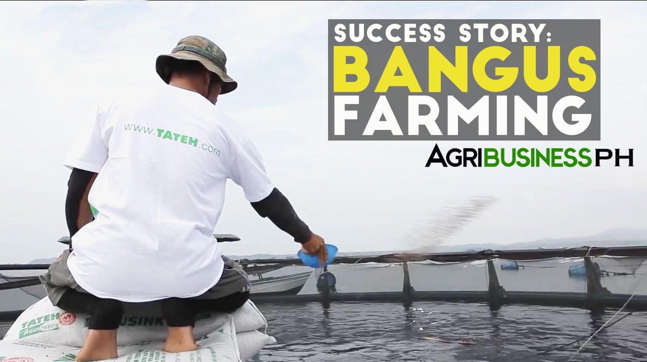 Download Bangus Farming: How to earn Millions in Bangus Farming
