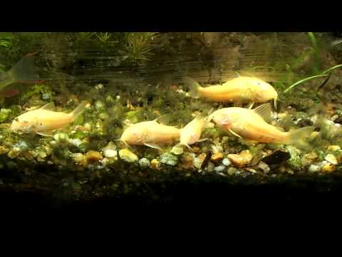 SETTING UP A FRESHWATER C-VUE AQUARIUM   PT 1: UNBOXING TANK & STAND   WE'RE GIVING AWAY THIS SETUP! from YouTube · Duration:  14 minutes 44 seconds