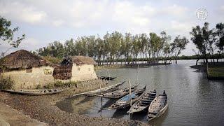 Дома жителей Сундарбана уходят под воду (новости)