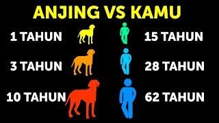 Kenapa Anjing Lebih Cepat Tua Dibandingkan Manusia