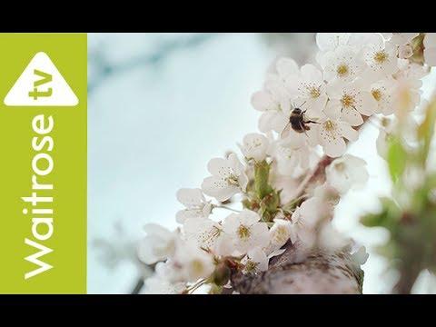 Cherries | Waitrose TV Ad