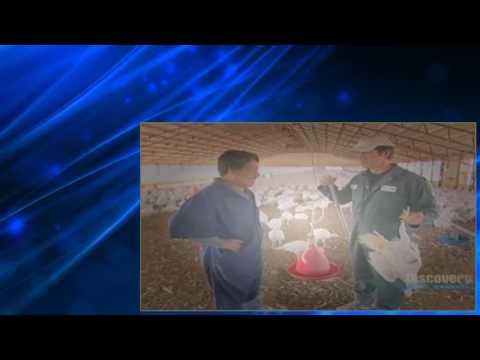 Dirty Jobs S02 E14 Turkey Farmer