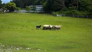 群馬のクローネンベルク(赤城高原牧場)のニュージーランドハンタウェ...