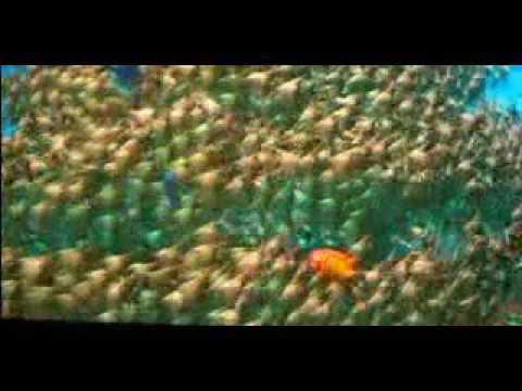 El Delfin (la Historia De Un Soñador) - Parte I.wmv