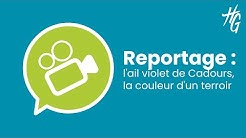 Reportage : l'ail violet de Cadours, la couleur d'un terroir