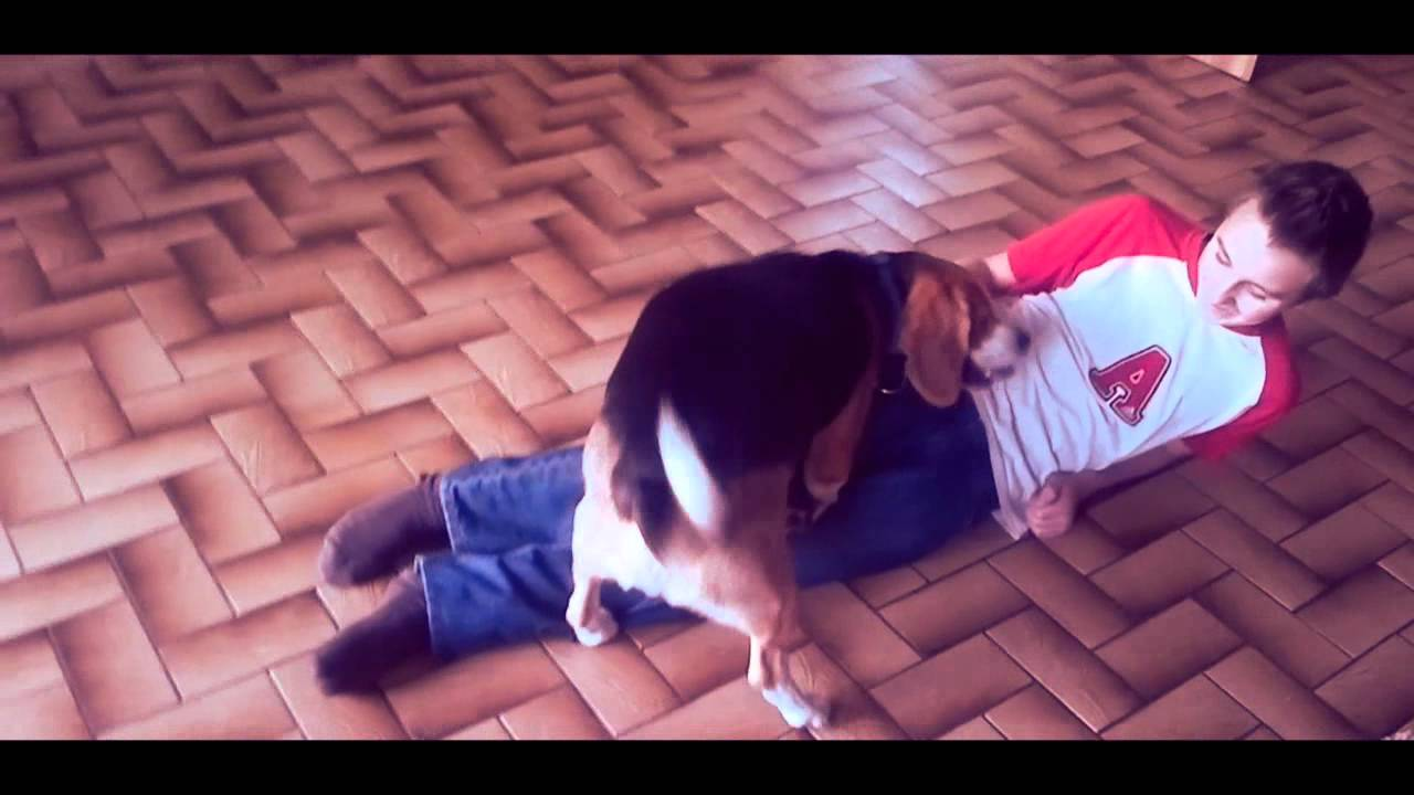 Hund Wird Gefickt