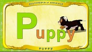 Multipedia of Animals. Letter P - Puppy