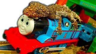 Thomas Tank And The Amazing Dinosaur Lizard Train Ride
