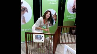Upgrade Pet Spaces With This Wooden Room Divider.