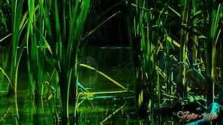 Vojto - Relax 512 - Večer pri jazere - Evening at the lake