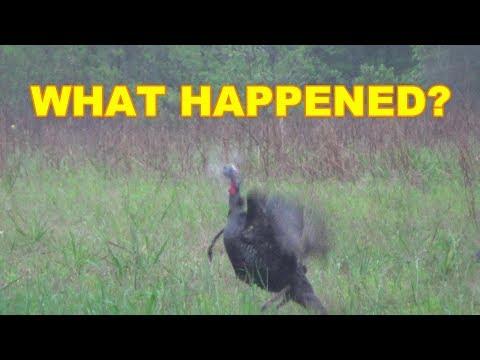 Turkey Hunting 2019 || Thunder Storm Gobbler