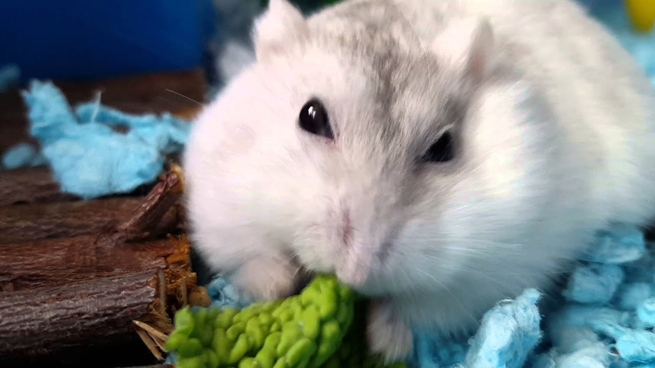 THE BEST HAMSTER CAGES FOR SALE | LARGE CAGES & HABITATS