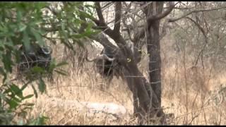 Afrique du Sud - Partie 4/6 - Le Parc Kruger