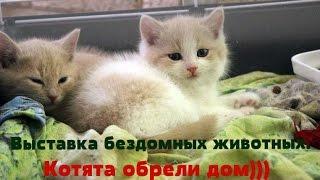 Выставка раздача бездомных животных Приют Зоозащита плюс город Серпухов