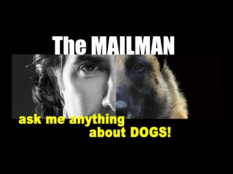 How Do I Get My Dog to STOP BARKING at the MAILMAN - Dog Training Video - ask me anything