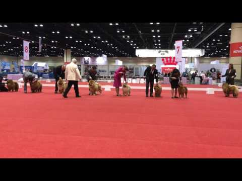 North Florida Chow Chow Club Specialty Show December 2016