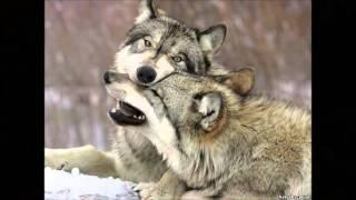 Мой фильм Волки